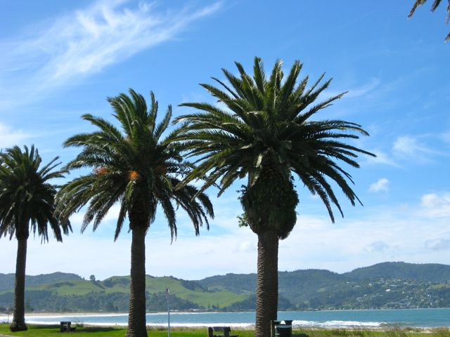 Whitianga, Coromandel Peninsula, New Zealand