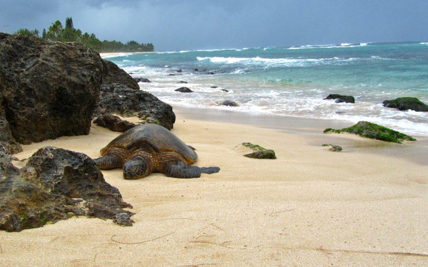 10 Beautiful Hawaiian Beaches – Oahu