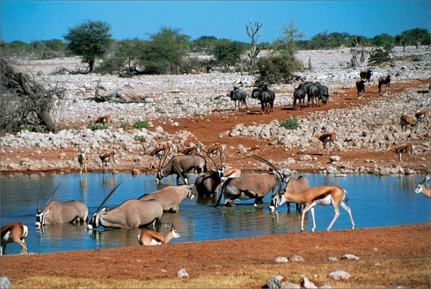 Etosha Namibia  city photos : Namibia – An African Realm of Wilderness and Sand