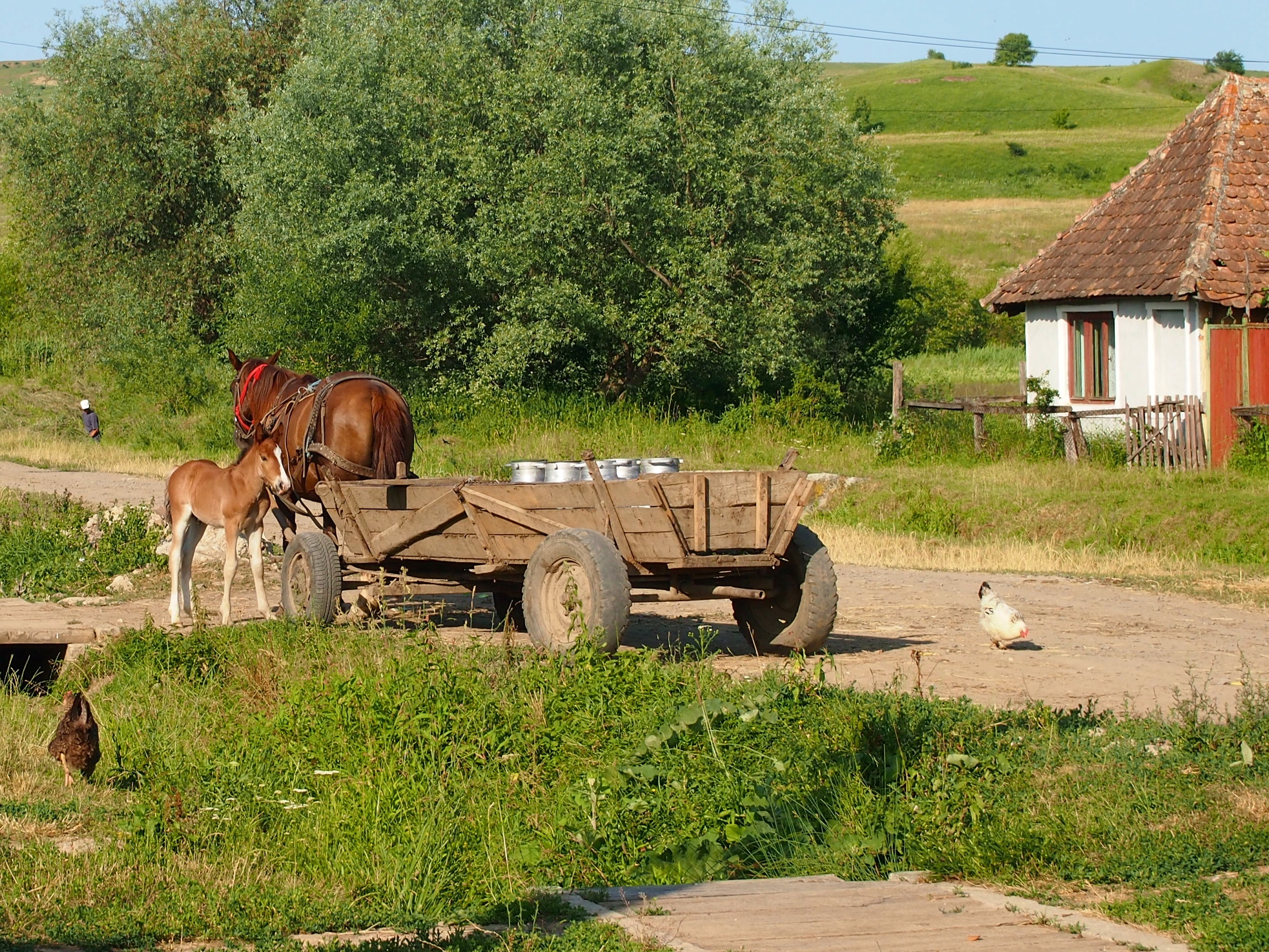 Rural Romanian Women 48