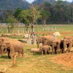 Get to Know Elephant Nature Park