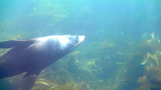Up Close and Personal with New Zealand Fur Seals
