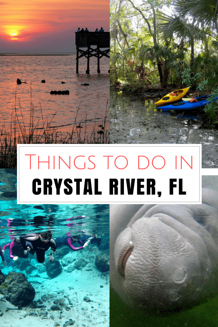 Travel Guide 5 Awesome Things To Do In Crystal River Florida