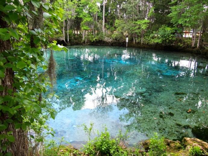 Crystal River Monkeys in Crystal River Florida