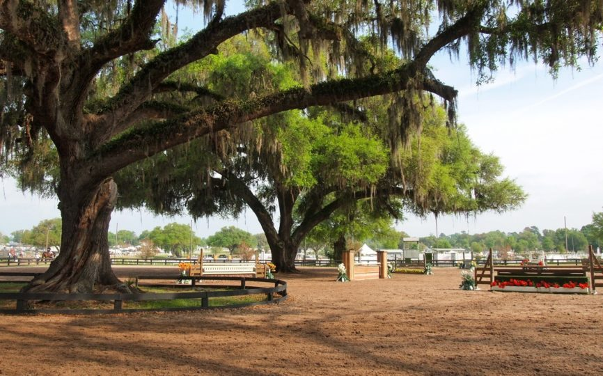 4 Unique Things to Do in Ocala, Florida