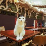 A Purrfect Afternoon Tea at London's First Cat Cafe