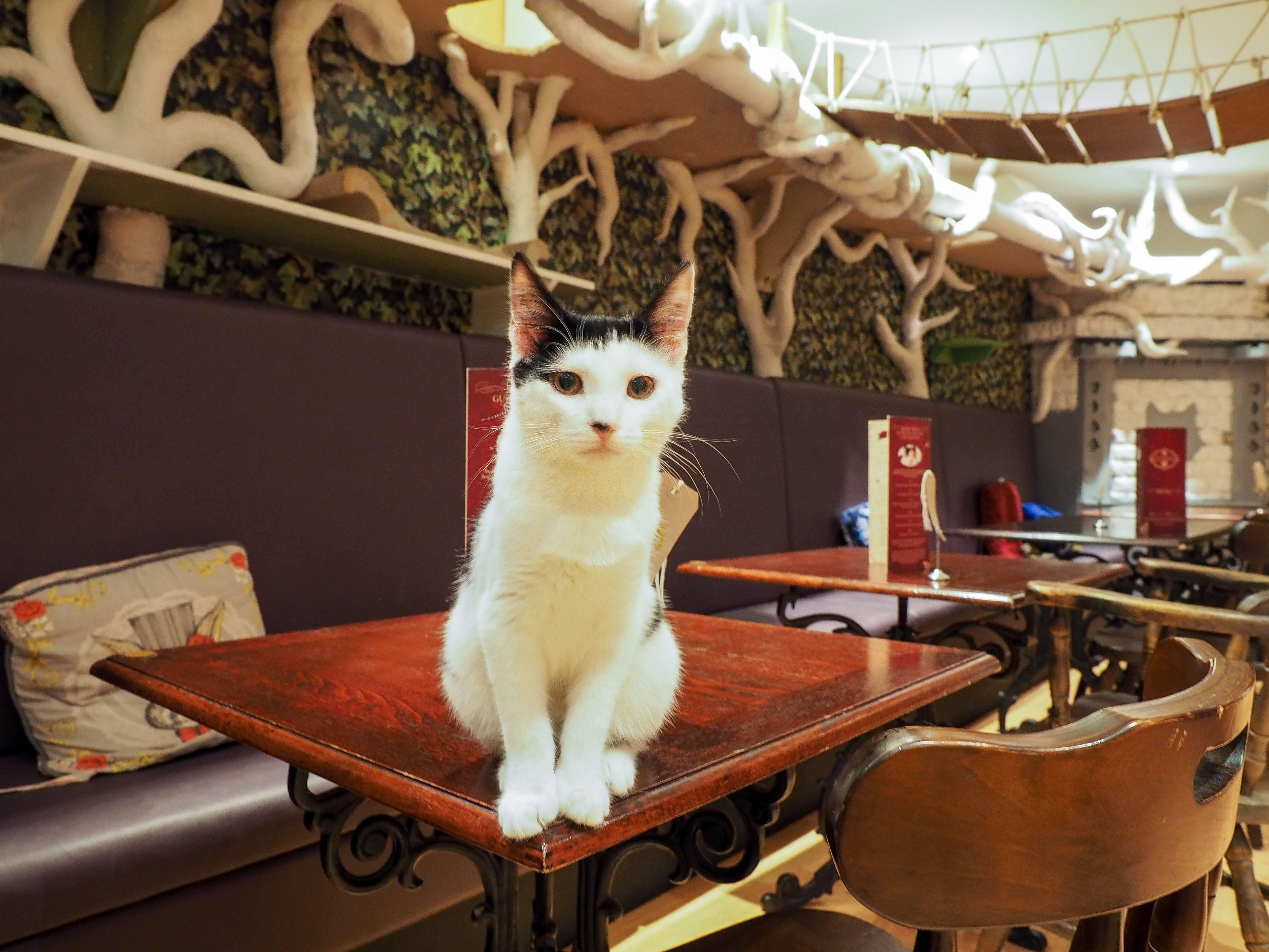 Lady Dinah's Cat Emporium in London