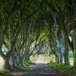 Discovering Ireland with Shamrocker Adventures