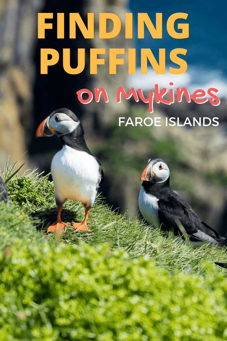 Seeing puffins on Mykines in the Faroe Islands