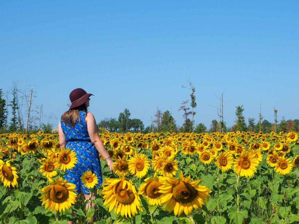 Amanda in sunflowers