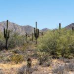 7 Reasons You Should Put Scottsdale, Arizona on Your Must-Visit List
