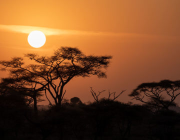 East Africa Highlights: Kenya and Tanzania with Rock My Adventure