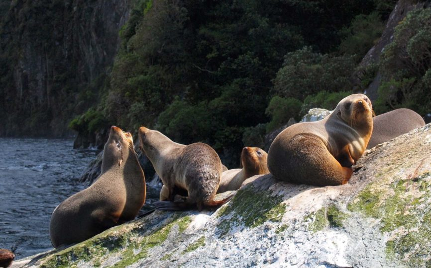 8 Unique (and Ethical) Wildlife Encounters to Have in New Zealand