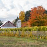 How to Spend One Epic Day on Michigan's Leelanau Peninsula