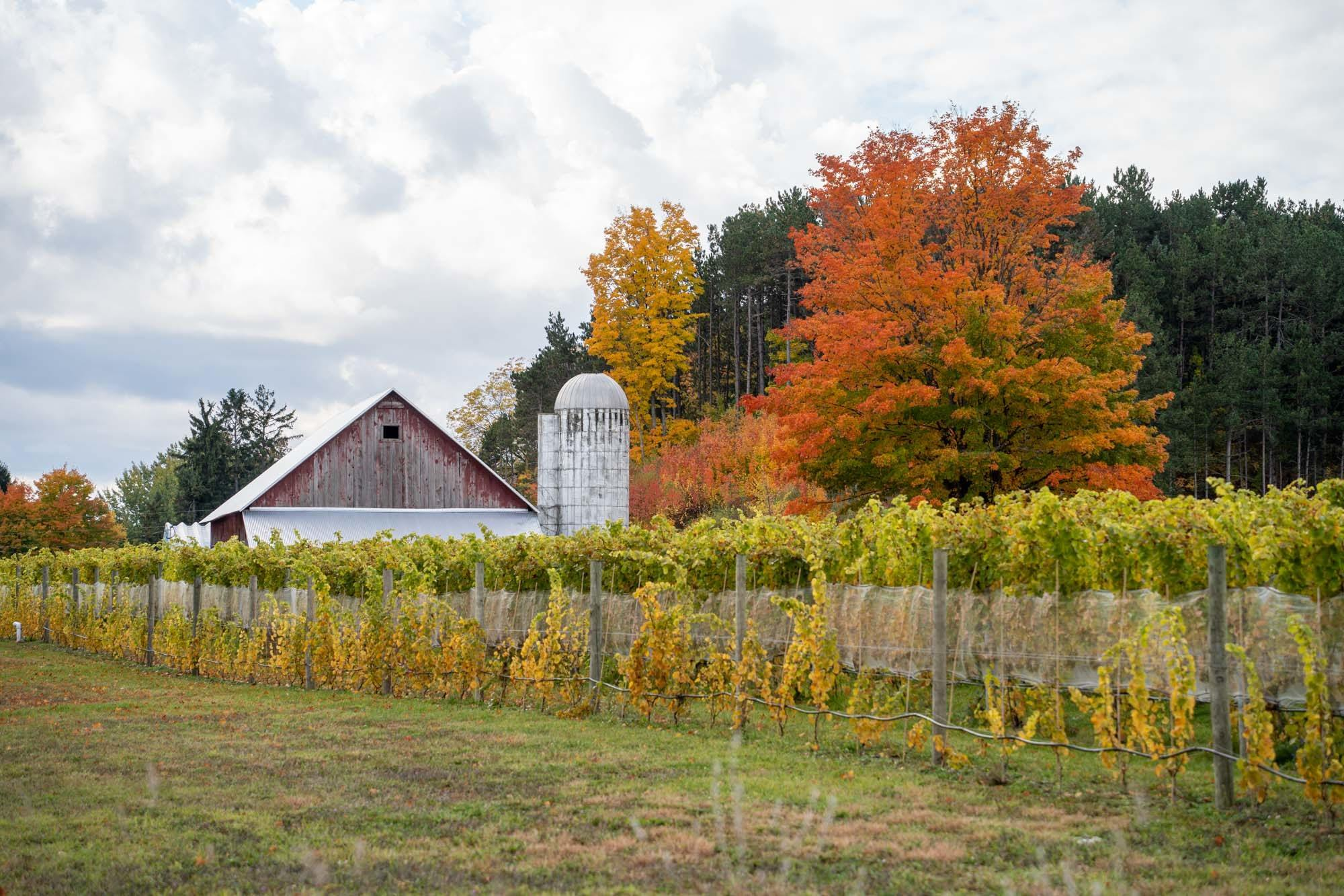 Vineyard and barn on the Leelanau Peninsula