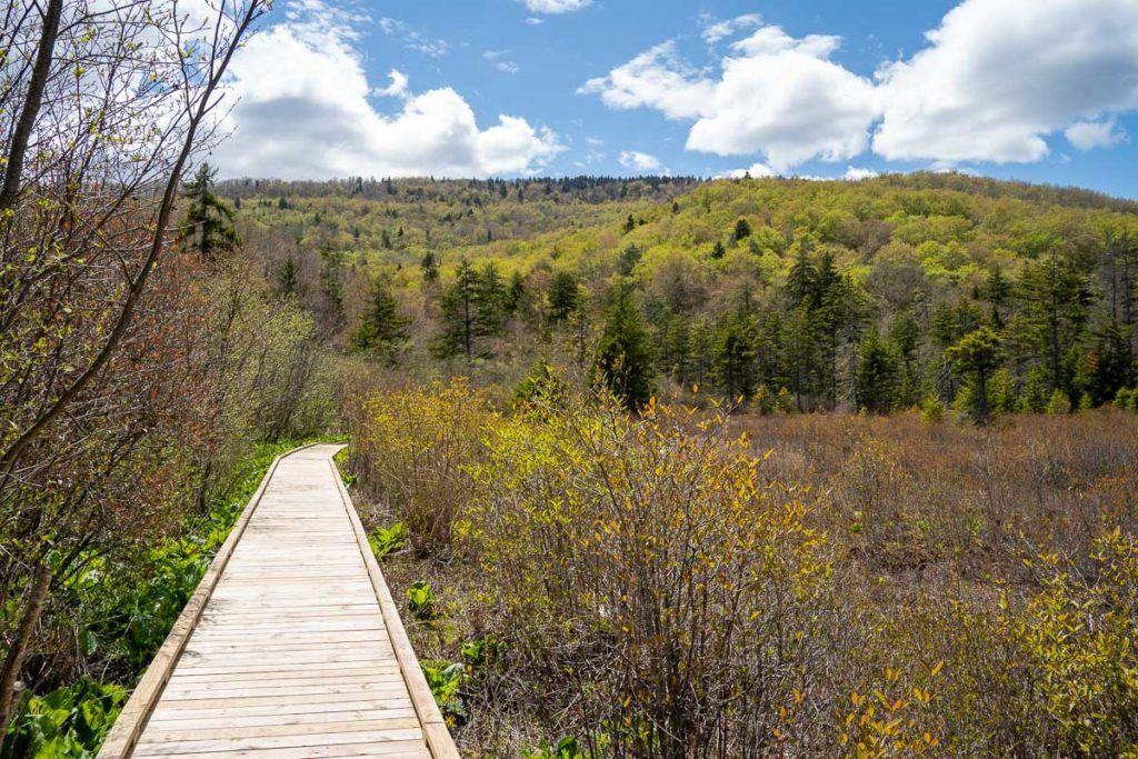 Cranberry Glades bog boardwalk